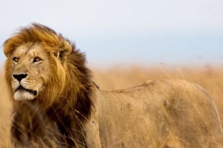 Cazador que mató a león Cecil regresa con protestas