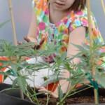 Mariguana-medicinal-podría-ayudar-a-niña