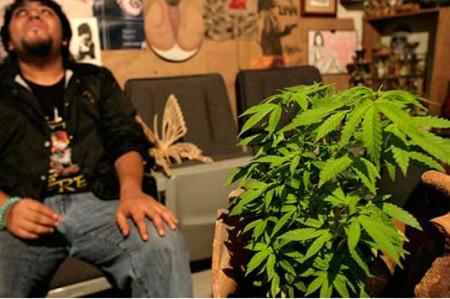 Obispos exigen discusión seria e incluyente sobre marihuana