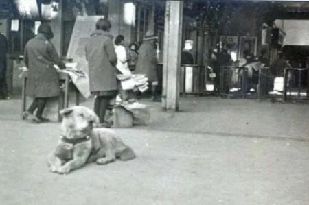 Difunden foto inédita del perro Hachiko