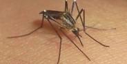Francia descarta recomendación de no viajar a México por Zika