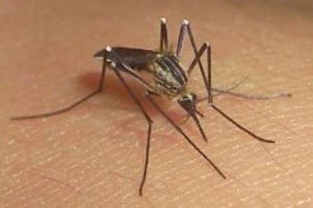 Yucatán llama a reforzar acciones contra el zika