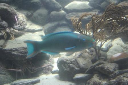 Politécnico identifica toxicidad en peces por residuos de fármacos