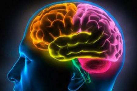 El cerebro rige tu generosidad