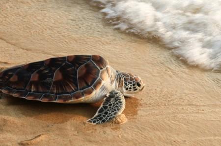 Autoridades de EU verifican protección de tortuga en pesca de camarón