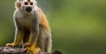 Monos ardilla, nuevos inquilinos del zoo de Reynosa