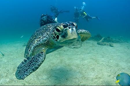 Cabo Pulmo, único ecosistema de arrecife en el Golfo de México
