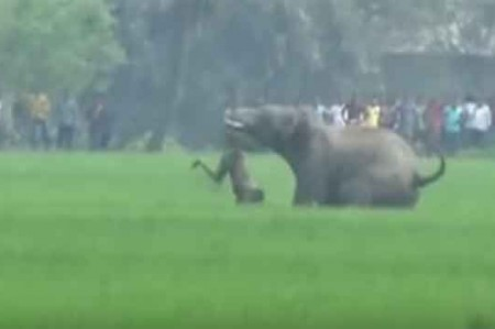 Elefante mata a hombre en la India; video