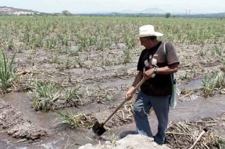 Campesinos temen que lluvias arruinen la siembra