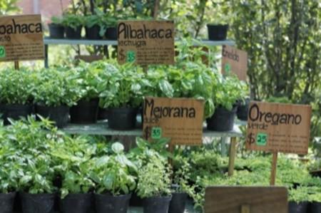 Ciudad de México tendrá jardín para conservar plantas medicinales