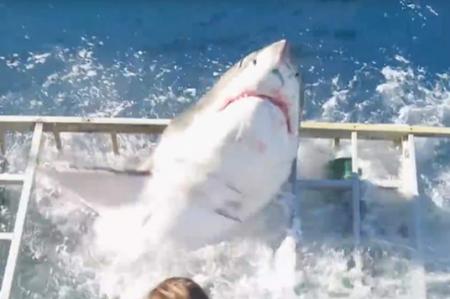 Nuevo video de ataque de tiburón se viraliza