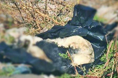 Cadáveres de perros movilizan a servicios de emergencia en Edomex
