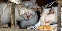 Buscan felinos otra oportunidad con Gato Fest 2017 en CDMX
