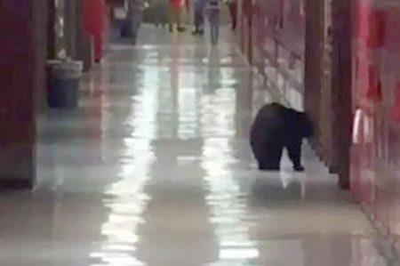 Secretaria de Educación quiere armas en escuelas por 'posibles osos'
