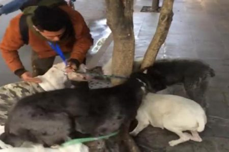 Exhiben a cuidador por golpear a perro en La Condesa