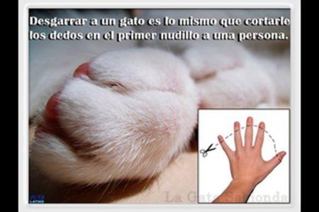 Ley busca prohibir onichectomías a los gatos en Nueva Jersey