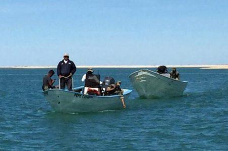 Aplican cero tolerancia en área de vaquita marina y totoaba