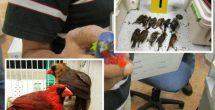 Capturan a un hombre que pretendía llevar 168 aves a Alemania