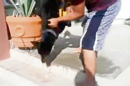 Envenenan 24 perros para limpiar alcaldía