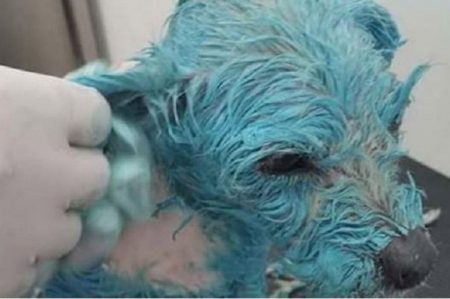 Muere perrita tras ser torturada en Morelia