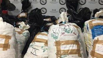 Aseguran 800 kilogramos de pepino de mar en Progreso, Yucatán