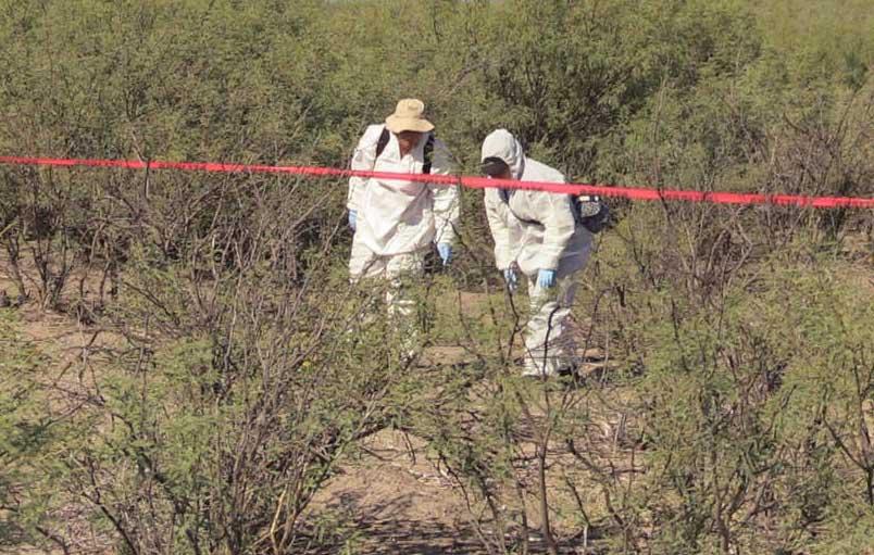 Hallan 5 cuerpos decapitados en Veracruz