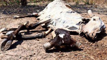 Campesinos de Juchitán exigen recursos a Conagua por fuerte sequía