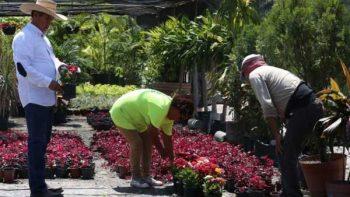 Impulsa vivero de ciudad Guadalupe cruzada ecológico