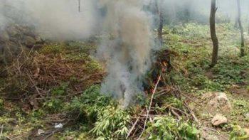 PGR destruye droga decomisada en Coahuila