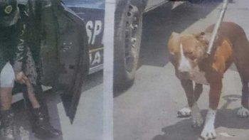 Lanzan petición para salvar a perro usado para asaltar