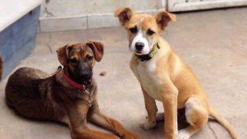 Realiza Desarrollo Sustentable visita a asociación de protección animal