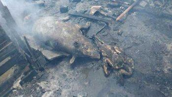 Se incendia local comercial; mueren cerdos, perros y patos
