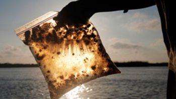 Bacterias limpiarán residuos de hidrocarburos en el Golfo de México