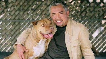 Agresividad de un perro, energía acumulada, señala César Millán