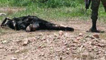 Descubren dos cuerpos desmembrados en predio de Michoacán