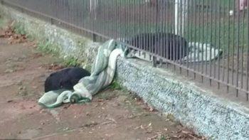 Perrita comparte su cobija con perro callejero