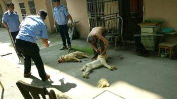Abuelito observa cómo policías matan a sus perros a golpes