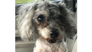 Familia ordena que sacrifiquen a su perrita porque sus dientes estaban podridos