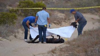 Hallan cuerpo calcinado en Guerrero Negro, BCS