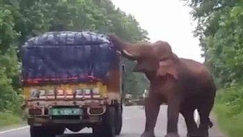 Elefante hambriento 'asalta' camión de papas (VIDEO)