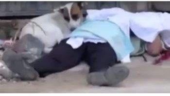Perro sufre al lado del cadáver de su amo (VIDEO)