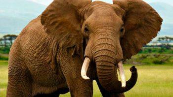 Joven muere al intentar tomarse selfie con elefantes
