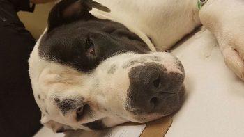 Asesinó a un cachorro por morderle los zapatos; dueños exigen justicia