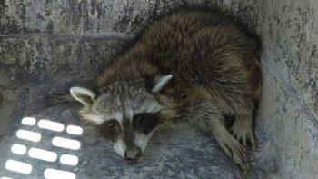 Asegura Profepa seis ejemplares de vida silvestre en Nuevo León
