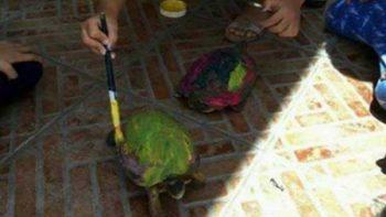 Causa polémica actividad donde niños pintan caparazones de tortugas