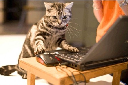 Siete razones por las que tener un gato es una gran opción