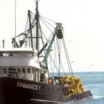 Peligran 820 mil plazas en el sector pesquero