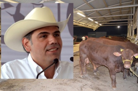 Exportan 160 mil cabezas de ganado tamaulipeco a Estados Unidos