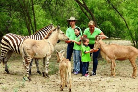 Khumba, el cebrasno del zoo de Reynosa, cumple un año
