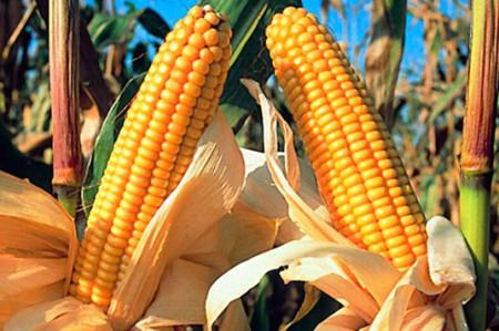 Protestan productores de maíz por importación